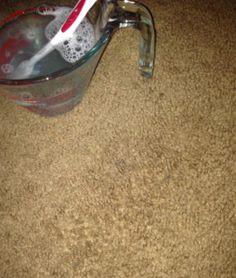 DIY Carpet Stain Remover Photo