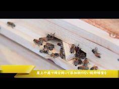 巣蜜フレーム 養蜂器具 自動はちみつ採取巣箱 フローハイブ 「Flow Hive」 トウタク(Taotuo)7個セット