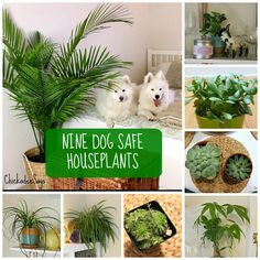 Dog Safe Plants for a Stylish Home If you want to decorate with houseplants, here are 9 dog-safe plants that wont harm your furry friend!If you want to decorate with houseplants, here are 9 dog-safe plants that wont harm your furry friend!