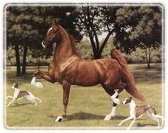 A fabulous mare, La La Success was a World's Grand Champion Fine Harness mare, and later became a member of the American Saddlebred Broodmare Hall of Fame.