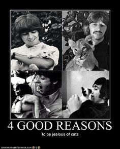 4 Reasons to envy cats...