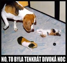 No, to byla tenkrát divoká noc Funny Cats, Cute Pictures, Haha, Avengers, Cute Animals, Harry Potter, Tattoo, Beautiful, Pictures