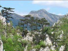 Panorama Arjana Mount Rainier, Mountains, Nature, Travel, Naturaleza, Viajes, Destinations, Traveling, Trips