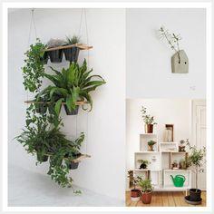 Planten ophangen in je huis
