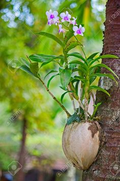 Gardne & flower ideas: උඩවැඩියා වගාවේන් නිවස සරසන්න Growing Orchids, Flower Ideas, Flowers, Plants, Garden, Garten, Planters, Royal Icing Flowers, Gardening