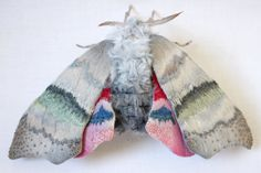 These Giants Bugs Are Actually Beautiful Textile Moths  http://funnybundle.com/yumi-okita-textile-moths/
