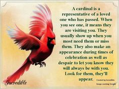 My mamaw zaddie loved cardinals. I always think of her when I see a cardinal. Estrella Cardinal, Bird Meaning, Bird Tattoo Meaning, Motto, Miss You Mom, First Love, My Love, After Life, In Loving Memory