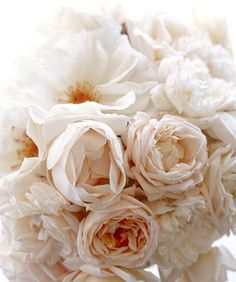 peonies. what can i say? they're wonderful and luscious and understatedly extravagant. such a soft pink...