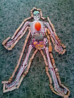 Ľudské telo:kostra a vnútorné orgány