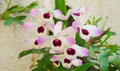 Orquídeas: principais espécies e segredos para cuidar das flores e montar um orquidário - Casa - MdeMulher - Ed. Abril