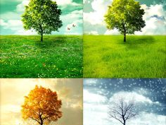 Veja se você está mais para as mudanças do outono, a liberdade do verão, o aconchego do inverno ou a beleza da primavera.