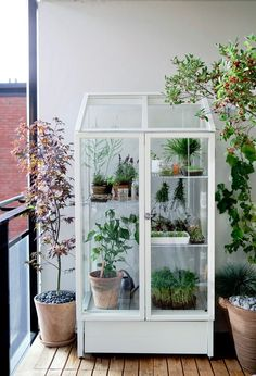 vintage pharmaceutical cabinet as a plant house