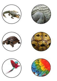 Animal Activities, Book Activities, Animal Coverings, Preschool Activity Books, Animal Classification, Montessori Materials, Jungle Theme, Working With Children, Pre School