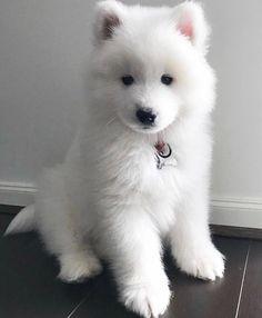 Cute Baby Puppies, Super Cute Puppies, Super Cute Animals, Cute Little Animals, Cute Funny Animals, Cute Cats, Baby Animals Pictures, Cute Animal Pictures, Cute Puppy Photos
