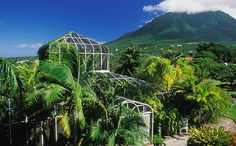 caribbean botanical garden - Google Search