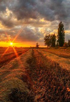 Kuban field, Krasnodar Krai, Russia.