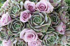 Echeveria 'Lola' and lavender roses