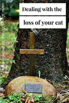 Dealing with the loss of your cat