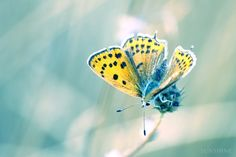 Digital download Butterfly photograph Spring by sunshineartdesign, $10.00