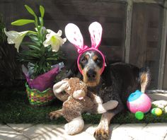 Easter Pictures! Do we think I could get Major to do this?