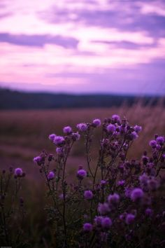 Purple Hour