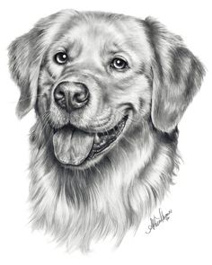 Dog paintings, pencil drawings of animals, dog drawings, drawing animal Realistic Animal Drawings, Realistic Sketch, Pencil Drawings Of Animals, Animal Sketches, Cool Art Drawings, Art Drawings Sketches, Drawings Of Dogs, Drawing Ideas, Dog Pencil Drawing