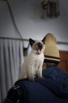 DIS MY PERSON!!!  (via Zillay Ali)