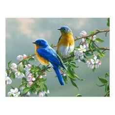 Blue Birds Postcard - postcard post card postcards unique diy cyo customize personalize