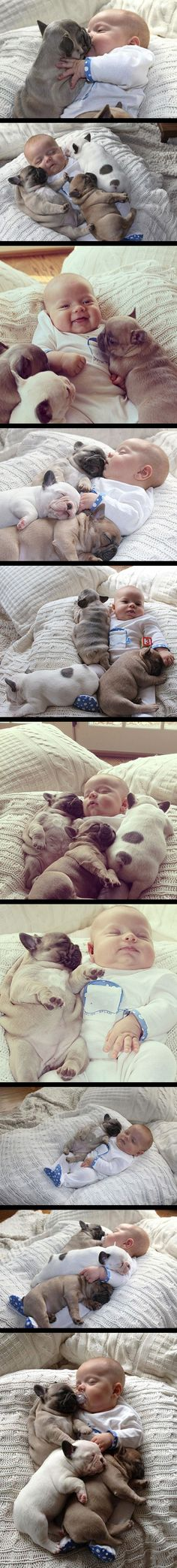 Baby covered in French bulldog puppies becomes an internet hit.