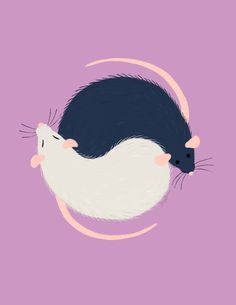pet rats | Tumblr