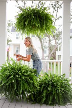 Hanging Ferns, Hanging Plants Outdoor, Outdoor Flower Planters, Hanging Flower Baskets, Fern Planters, Potted Ferns, Indoor Ferns, Front Porch Plants, Front Porch Flowers