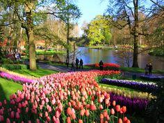 Keukenhof, the most beautiful spring garden in the world