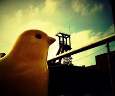 I Know Why the Canary No Longer Sings  By Dr Misty Hook, PhD | 12 March 2012One Comment