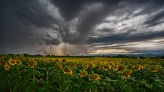 Gewitterwolken Landscape Photography, Nature Photography, Vineyard, Clouds, Draw, Outdoor, Pictures, Thunder Clouds, Scenery Photography