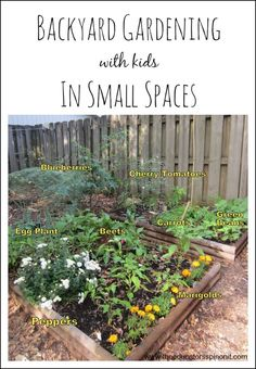 Backyard Gardening with kids in Small Spaces.  Tips for how to get your family started with growing vegetables and fruits in your garden.