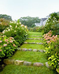 "Pretty path  ""Tardiva"" and ""Annabelle"" hydrangeas, ""Diana"" Rose of Sharon hibiscus, and Hosta plantaginea line the walkway behind this Mar..."