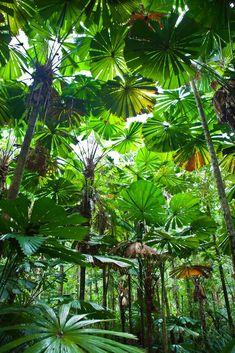 The ultimate road trip through tropical North Queensland, Australia