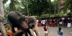 Rama (Thechikkotkavu Ramachandran) is a famous elephant in Asia - but he's being beaten and... (36140 signatures on petition)