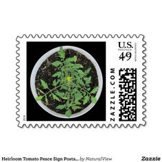 Heirloom Tomato Peace Sign Postage Stamps - USA by Natural View