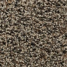 New carpet! STAINMASTER�Active Family Austere Coolidge Frieze Indoor Carpet