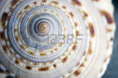 Natural spa elements- seashell with starshell and stones on white Stock Photo