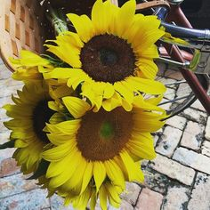 "When I was taking these home, I heard a man call out #Flor de sol, la flor de la brujería"" - I thought well either way I'm good #sunflowers #flordesol #feelingwitchy #coconutgrove #miami #florida #sofiaishome"