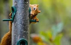 A bird feeder you say?
