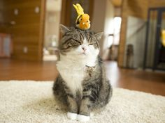 Maru:[As you are not edible, I am not interested in you.] 12/8, 3-1 via 私信