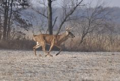 One Easy Strategy That Will Make Deer Numbers on Your Property Explode [PICS] - Wide Open Spaces