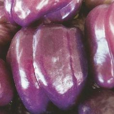 How to Grow Purple Beauty Peppers from Seeds