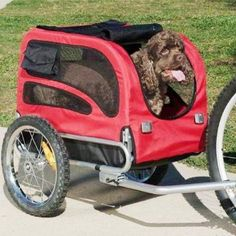 take your senior dog to the park in a bike trailer so he has the energy to play. These attach to your bicycle easily. Dog Bike Trailer, Used Bikes, Pet Supply Stores, Summer Dog, Dog Activities, Medium Dogs, Pet Accessories, Dog Life, Your Dog