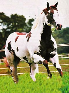 Paint horse .... can I have you please ???