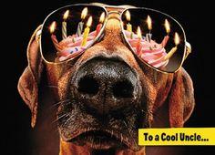 £2.79 GBP - Avanti Uncle Birthday Humour Greeting Card Funny Range Cards #ebay #Home & Garden Birthday Meme Dog, Happy Birthday Dog, Birthday Wishes Funny, Happy Birthday Quotes, Happy Birthday Images, Happy Birthday Greetings, Birthday Pictures, Birthday Greeting Cards, Birthday Humorous