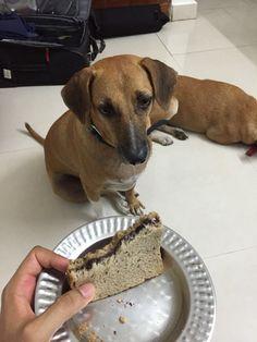 Whitepaw's eyes follow bread